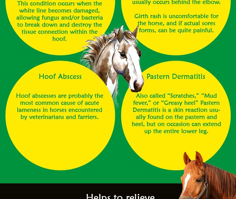 Keeping Your Horse Healthy