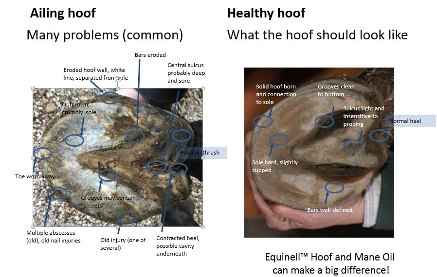 Hoof Comparison Healthy Hooves