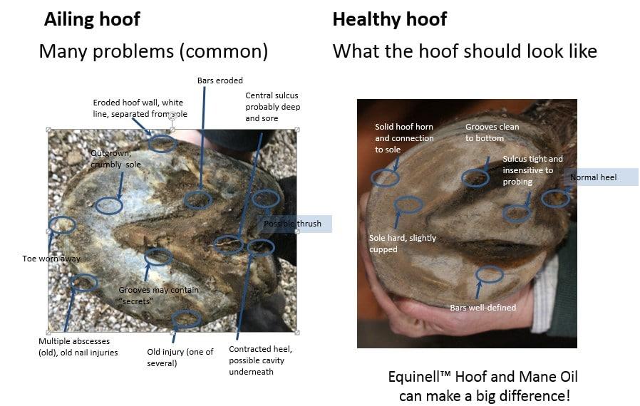 Hoof Comparison Healthy Hooves